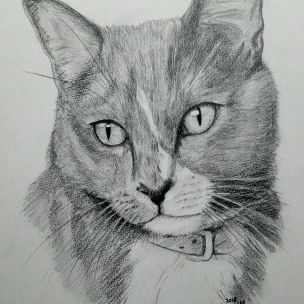 Cedar - cat portrait