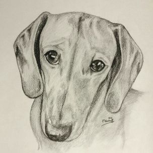 Ella - dog portrait